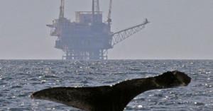 balena-coda-capodoglio-ricerca-trivelle-petrolio-okl-860x450_c